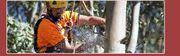 Professional Tree Stump Removal Service in Cork