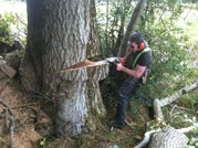 Find Expert Tree Surgeon in Dublin - Elite Tree Services