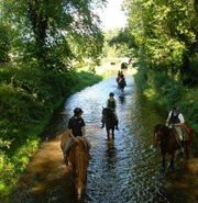 Have a Memorable Riding Holiday in Ireland with Crossogue Equestrian